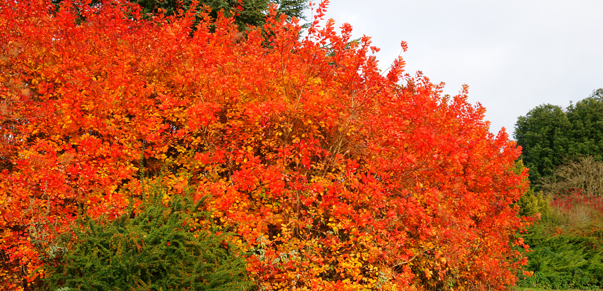 Autumn Colours Box Hill