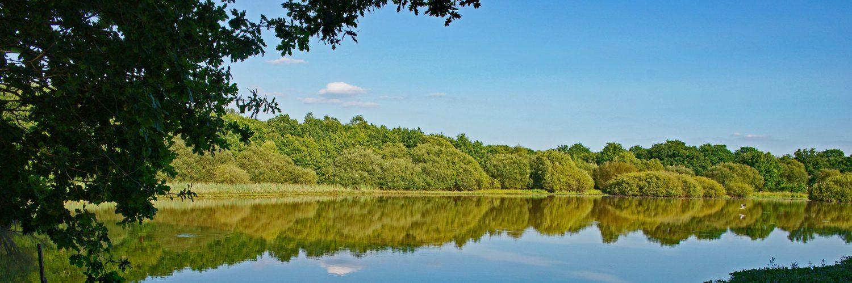 Great Pond Epsom Common